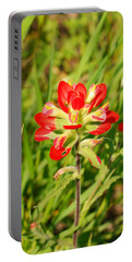 Indian Paintbrush Close Up Portable Battery Charger