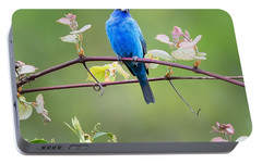 Indigo Bunting Perched Square Portable Battery Charger by Bill Wakeley