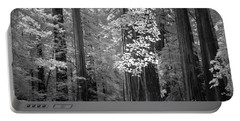 Inside The Groves Of The Redwoods Portable Battery Charger by Craig J Satterlee