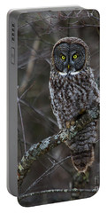 Intensity - Great Gray Owl Portable Battery Charger