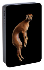 Italian Greyhound Dog Jumping, Hangs In Air, Looking Camera Isolated Portable Battery Charger by Sergey Taran