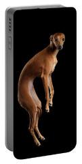 Italian Greyhound Dog Jumping, Hangs In Air, Looking Camera Isolated Portable Battery Charger