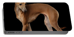 Italian Greyhound Dog Standing  Isolated Portable Battery Charger by Sergey Taran