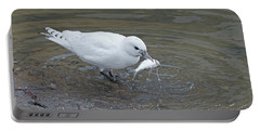 Ivory Gull #2 Portable Battery Charger