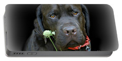 Portable Battery Charger featuring the photograph Just Jack by Barbara S Nickerson
