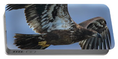 Juvenile Bald Eagle Portable Battery Charger by Coby Cooper