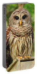 Juvenile Barred Owl Portable Battery Charger