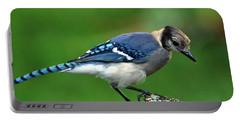 Juvenile Blue Jay  Portable Battery Charger