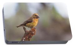 Juvenile Male Red Crossbill Portable Battery Charger by Doug Lloyd