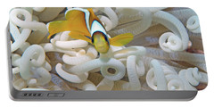 Juvenile Red Sea Clownfish, Eilat, Israel 3 Portable Battery Charger