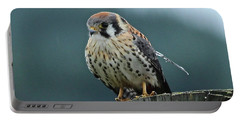 Portable Battery Charger featuring the photograph Kestrel Hawk by Ann E Robson