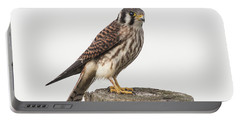 Portable Battery Charger featuring the photograph Kestrel Portrait by Robert Frederick