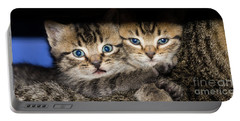 Kittens In The Shadow Portable Battery Charger