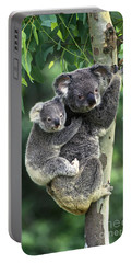 Koala And Young Portable Battery Charger