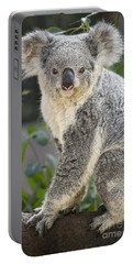 Koala Female Portrait Portable Battery Charger