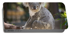 Koala In Tree Portable Battery Charger