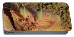 Lamu Island - Crab - Close Up 1 Portable Battery Charger
