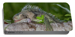Portable Battery Charger featuring the photograph Lazy Iguana by Rachel Lee Young