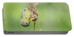 Lesser Goldfinch 4057-071117-1cr Portable Battery Charger
