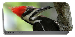 Lick It Up - Pileated Woodpecker Portable Battery Charger