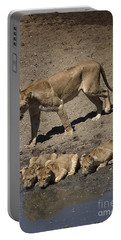 Lion Cubs And Mom Get A Drink Portable Battery Charger by Darcy Michaelchuk