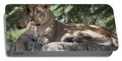 Portable Battery Charger featuring the photograph Lion by Dart Humeston