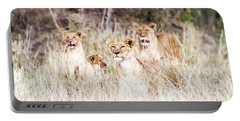 Lion Pride Lying In Tall Grass Portable Battery Charger