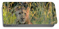 Lion Warily Watching Portable Battery Charger