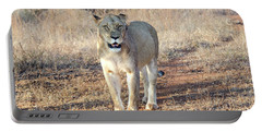 Portable Battery Charger featuring the photograph Lioness In Kruger by Pravine Chester