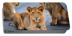 Lions Stare Portable Battery Charger