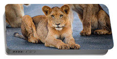 Portable Battery Charger featuring the photograph Lions Stare by Gaelyn Olmsted