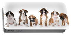 Litter Of Boxer Puppies Portable Battery Charger