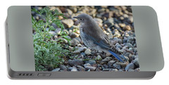 Little Fledgling Mountain Bluebird Portable Battery Charger