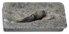 Portable Battery Charger featuring the photograph Baby Loggerhead Hatchling by John Black