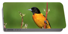 Male Baltimore Oriole Posing Portable Battery Charger