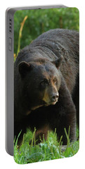 Portable Battery Charger featuring the photograph Male Black Bear In Late Light by Coby Cooper