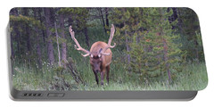 Bull Elk Rmnp Co Portable Battery Charger