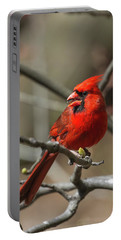 Male Northern Cardinal In Spring Portable Battery Charger