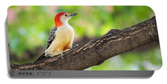 Male Red-bellied Woodpecker Portable Battery Charger