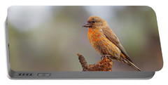 Male Red Crossbill Portable Battery Charger