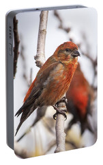Male Red Crossbills Portable Battery Charger by Robert Potts