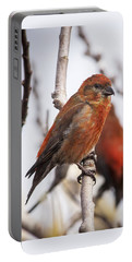 Male Red Crossbills Portable Battery Charger