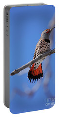 Male Red Shafted Northern Flicker Portable Battery Charger