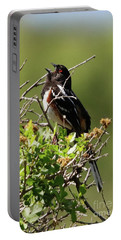 Male Spotted Towhee Portable Battery Charger