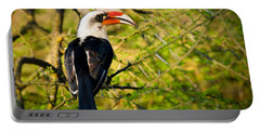 Male Von Der Decken's Hornbill Portable Battery Charger