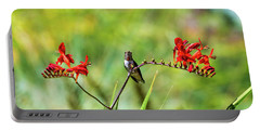 Male Young Hummingbird Perched Portable Battery Charger