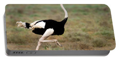 Masai Ostrich Struthio Camelus Running Portable Battery Charger