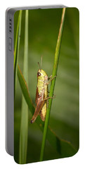 Portable Battery Charger featuring the photograph Meadow Grasshopper by Jouko Lehto