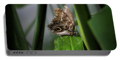 Portable Battery Charger featuring the photograph Misty Morning Owl by Karen Wiles