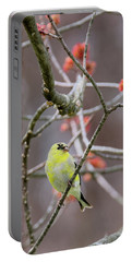 Portable Battery Charger featuring the photograph Molting Gold Finch by Bill Wakeley